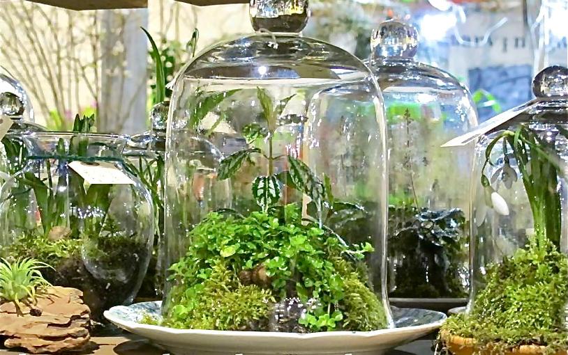 terrarium-cloches-photo-personal-garden-coach-420426_10150611853419584_269973274583_9088575_1777227106_n
