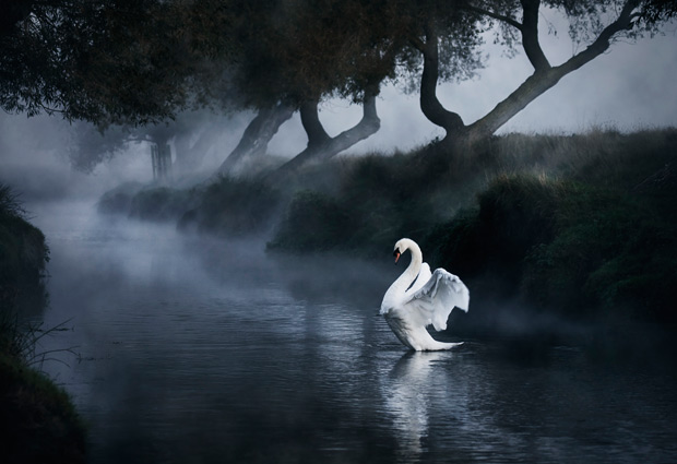 richmond-swan-mist_1864032i