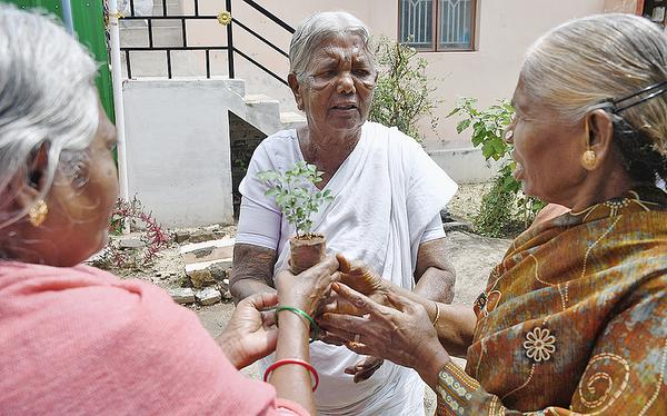 COIMBATORE, TAMIL NADU 20/10/2019. (for MetroPlus)  S. Nanjammal from Thoppampatti in Coimbatore, supplies seeds and saplings of vegetables free of cost to families in her village on Sunday October 20, 2019. Photo: M. Periasamy/ The Hindu.