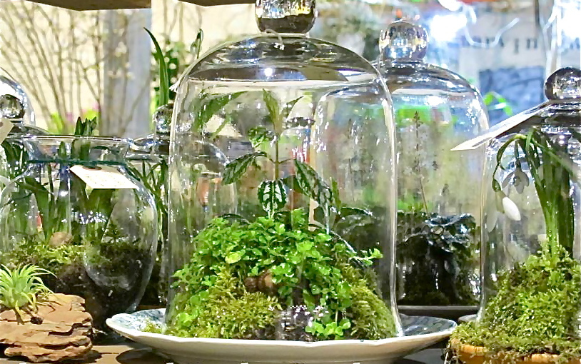 terrarium-cloches-photo-personal-garden-coach-420426_10150611853419584_269973274583_9088575_1777227106_n