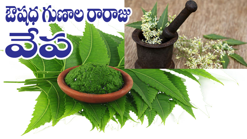 Neem-leaves-and-powderT