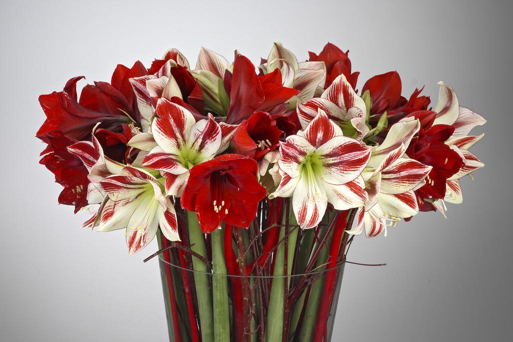 gary's flowerdesign